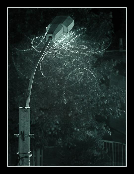 """фото """"Ночной """"полет шмеля"""""""" метки: природа, пейзаж, насекомое, ночь"""
