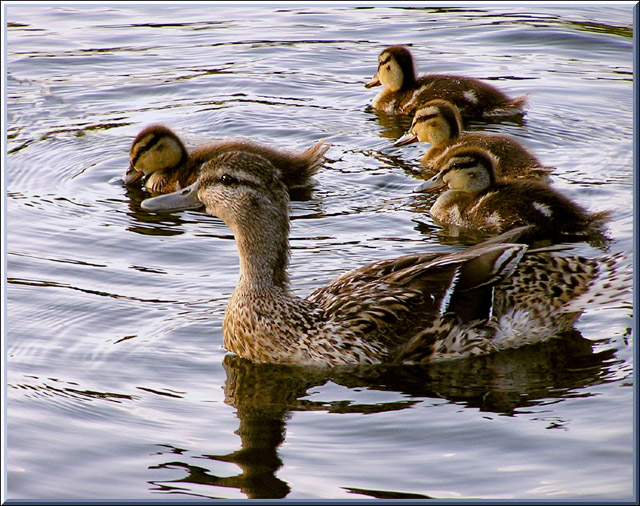 "photo ""Sweet family"" tags: nature, pets/farm animals"