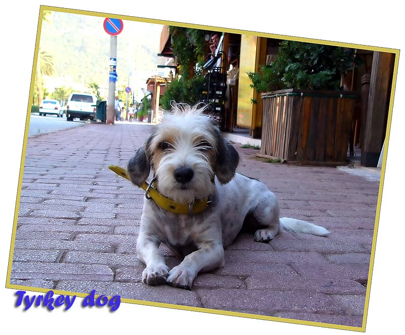 "photo ""***"" tags: travel, nature, Asia, pets/farm animals"