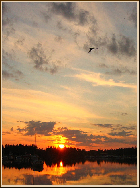 "photo ""The bird and the night"" tags: landscape, night, sunset"