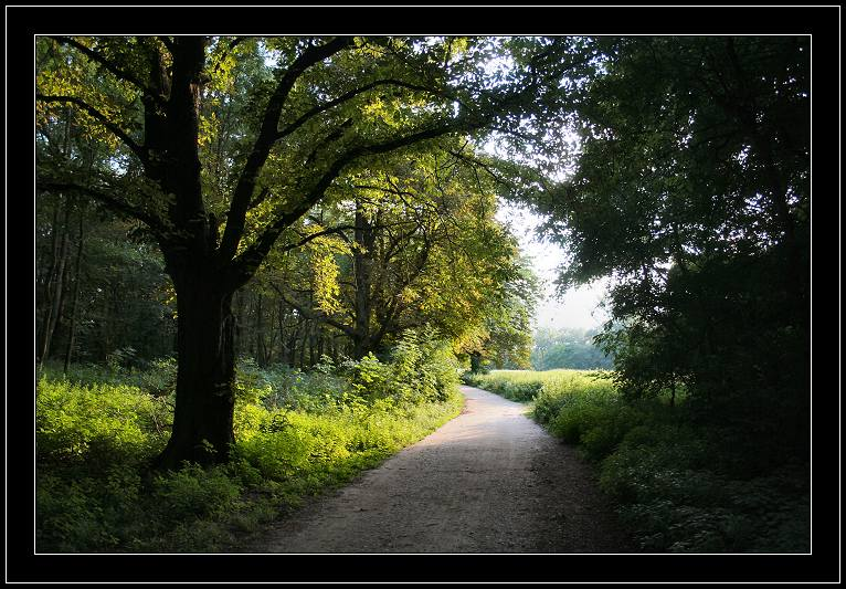 "photo ""Something Trivial"" tags: landscape, forest, sunset"
