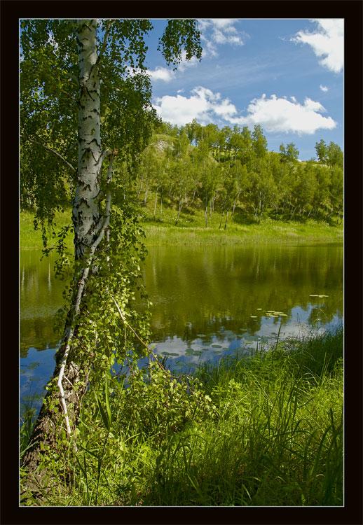 "photo ""Некому березу заломати..."" tags: misc., landscape, summer"
