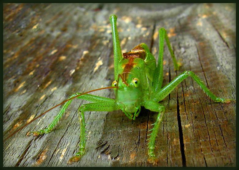 """фото """"Привет! Это я!"""" метки: макро и крупный план, природа, насекомое"""