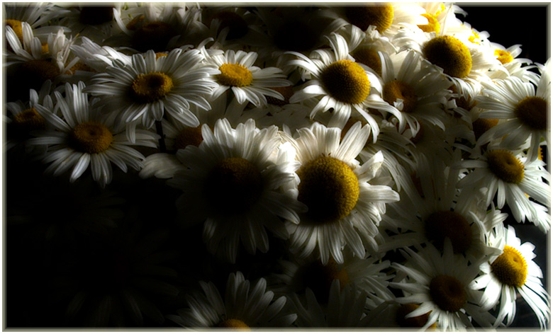 "photo ""Movement of stillife"" tags: still life, nature, flowers"