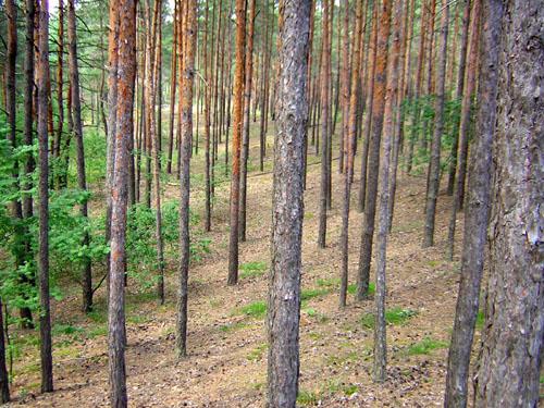 "фото ""in the forest#1"" метки: пейзаж, природа, лес"