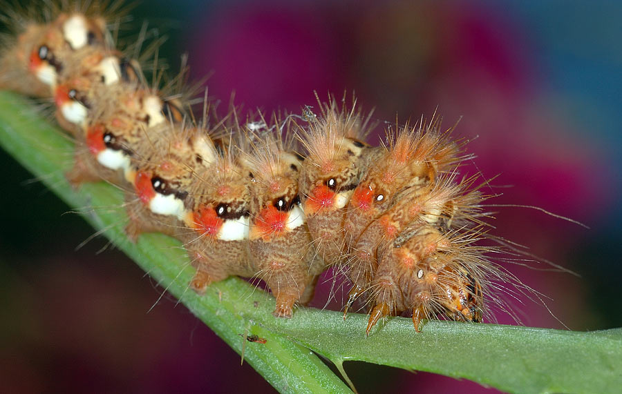 "photo ""Caterpillar"" tags: macro and close-up, nature, insect"