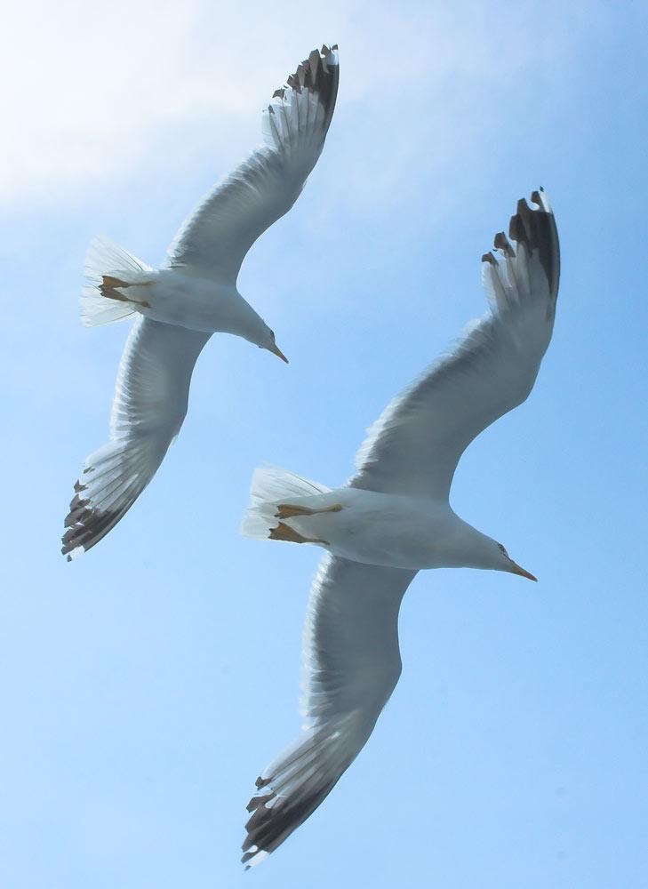 "photo ""Flight2"" tags: nature, wild animals"