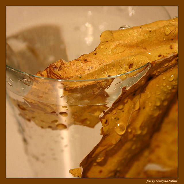 "photo ""Autumn"" tags: macro and close-up, still life,"