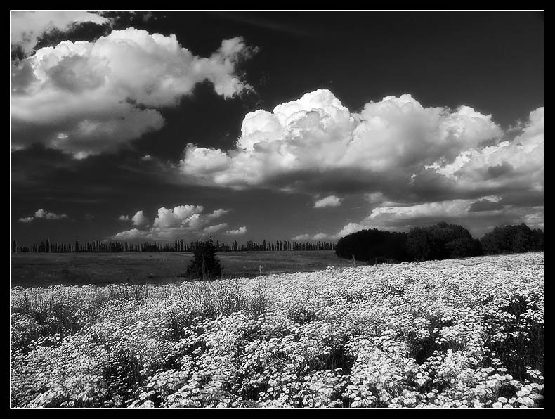 "photo ""White field"" tags: landscape, summer"