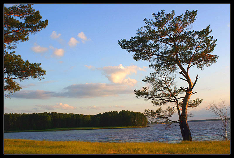 "photo ""Pinetree"" tags: landscape, summer, water"