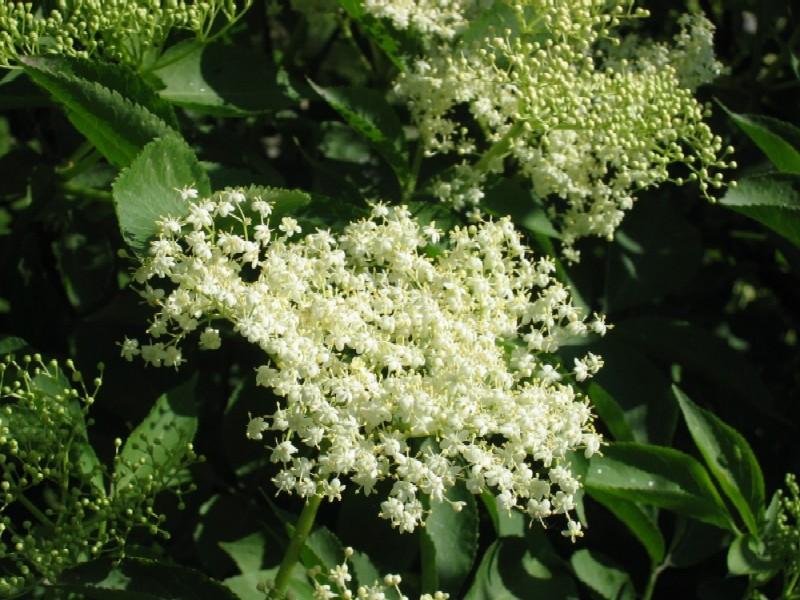 "photo ""tsvetu"" tags: macro and close-up, nature, flowers"