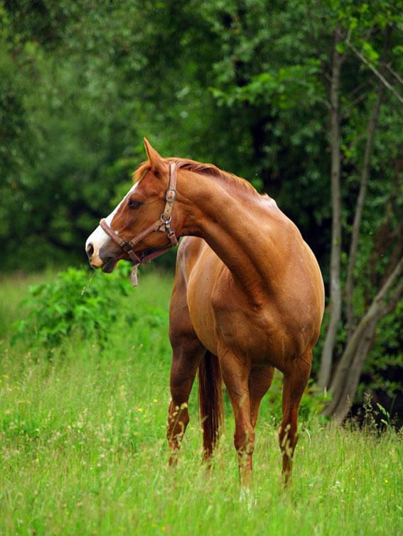 """фото """"elegance"""" метки: природа, домашние животные"""