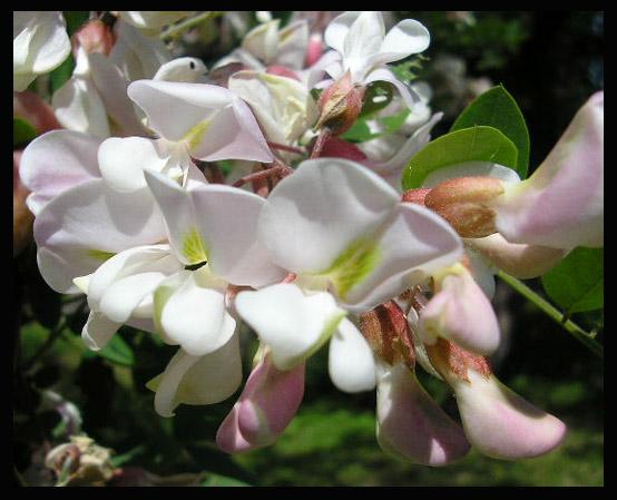 """фото """"цветок"""" метки: макро и крупный план, природа, цветы"""