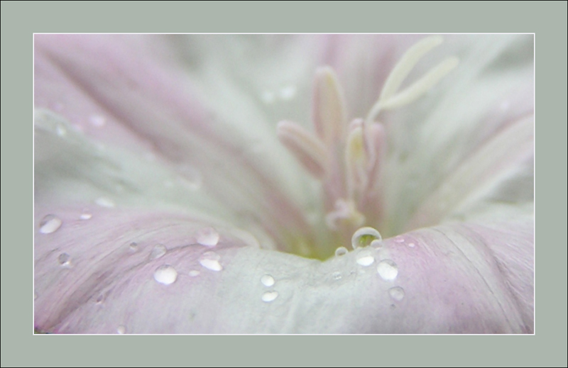 "photo ""dew"" tags: nature, flowers"