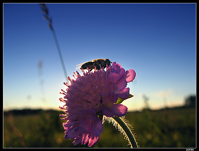 "photo ""Evening repast"" tags: nature, insect"