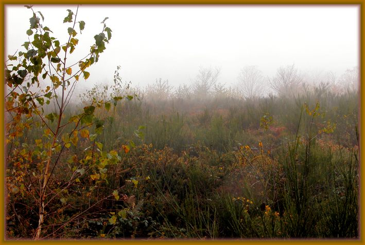 "photo ""Fogs and mists - 06"" tags: nature, landscape, clouds, flowers"