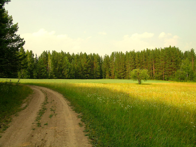 "photo ""h e a t"" tags: landscape, forest, summer"