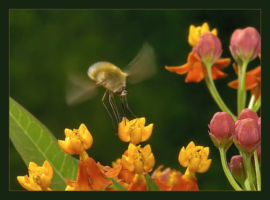 "photo ""Light agricultural aviation"" tags: nature, macro and close-up, insect"