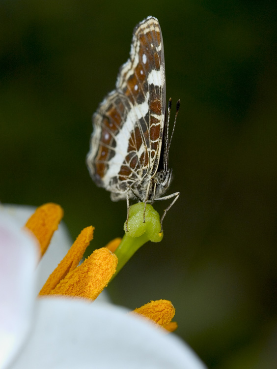 "photo ""Something is not present appetite"" tags: macro and close-up, nature, insect"