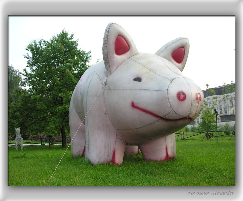"photo ""Pig"" tags: genre,"