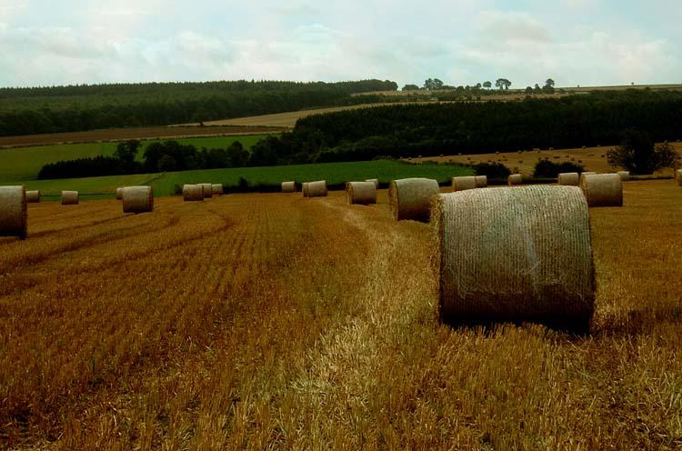 "photo ""a summer field"" tags: landscape, summer"