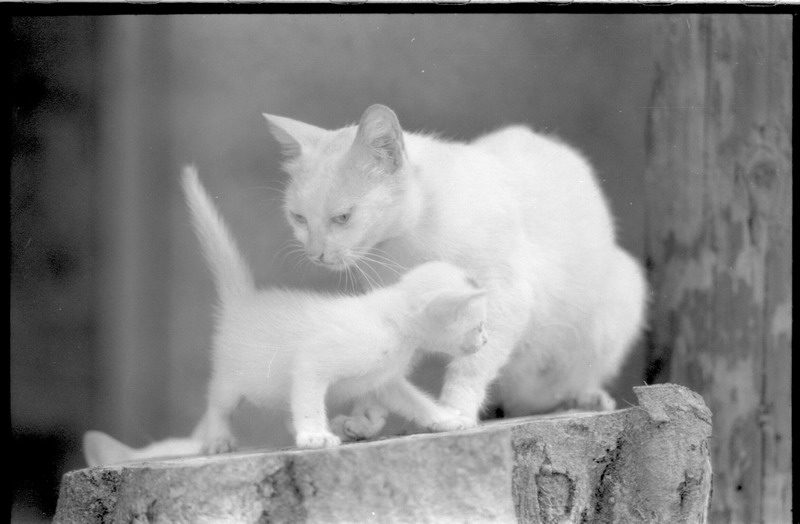 "photo ""2 cats"" tags: nature, black&white, pets/farm animals"
