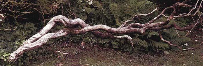 """photo """"Fallen."""" tags: landscape,"""