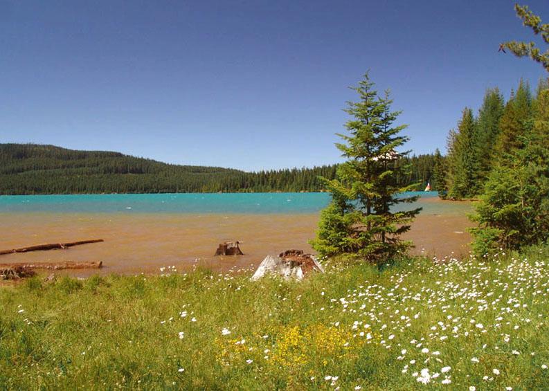 "фото ""*На озере.*"" метки: природа, пейзаж, лето"