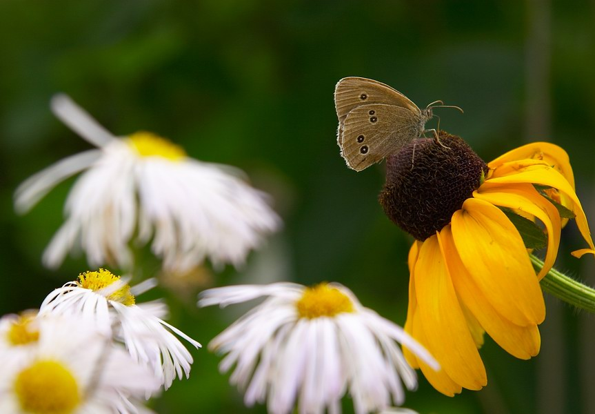 "photo ""Summer 2"" tags: nature, flowers, insect"