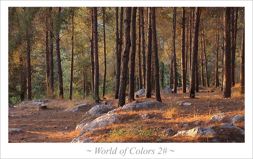 "photo ""~ world of colors ~"" tags: nature, landscape, forest"
