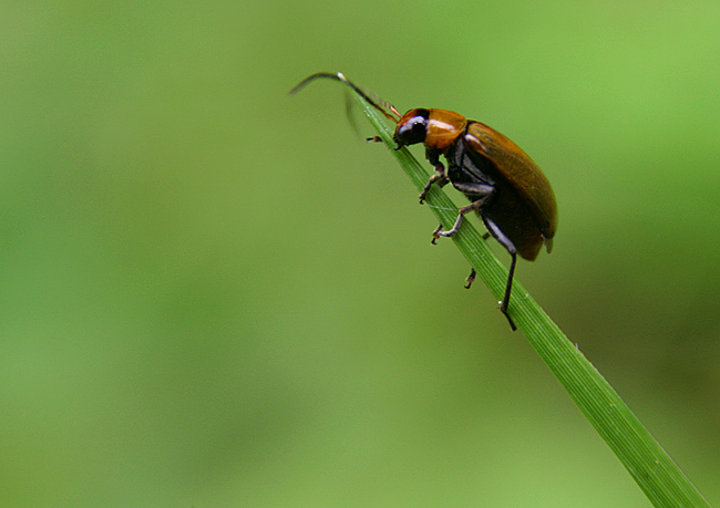 "photo ""End of the Line"" tags: macro and close-up, nature, insect"