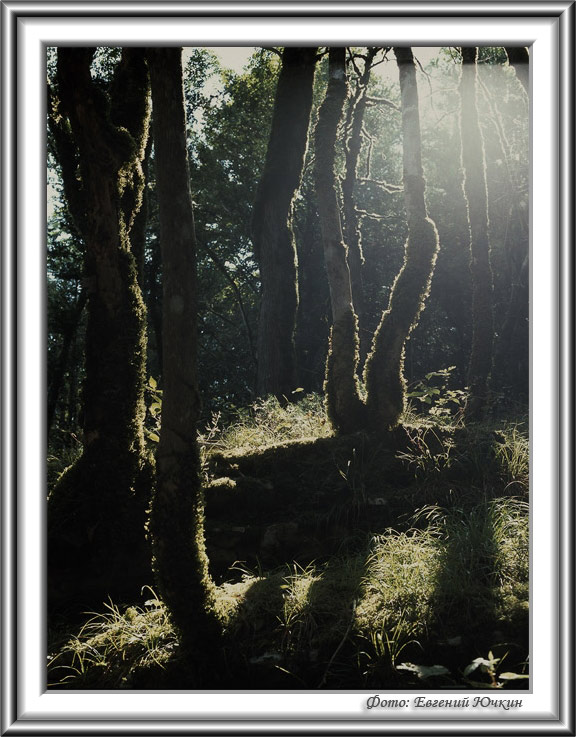 """photo """"Wood"""" tags: landscape, forest, mountains"""