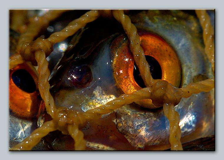 """photo """"Fish eye"""" tags: still life, nature,"""