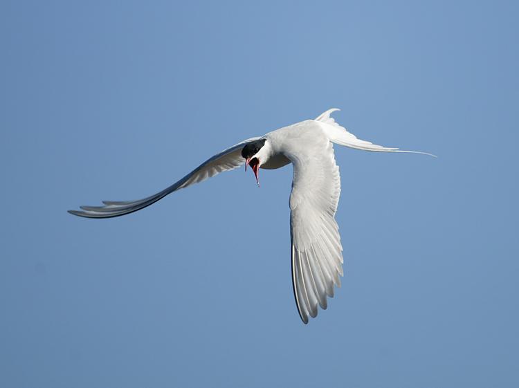 """фото """"Птицу видно по полету"""" метки: природа, дикие животные"""