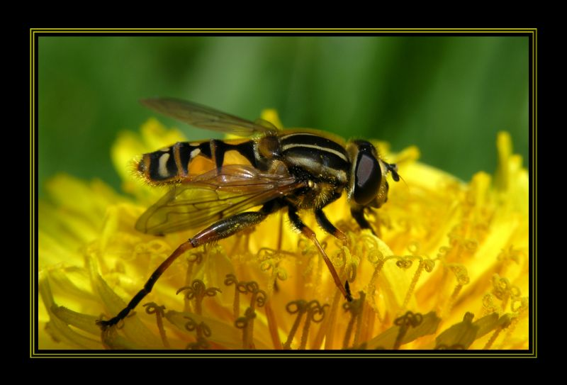 "photo ""In yellow tones."" tags: nature, insect"