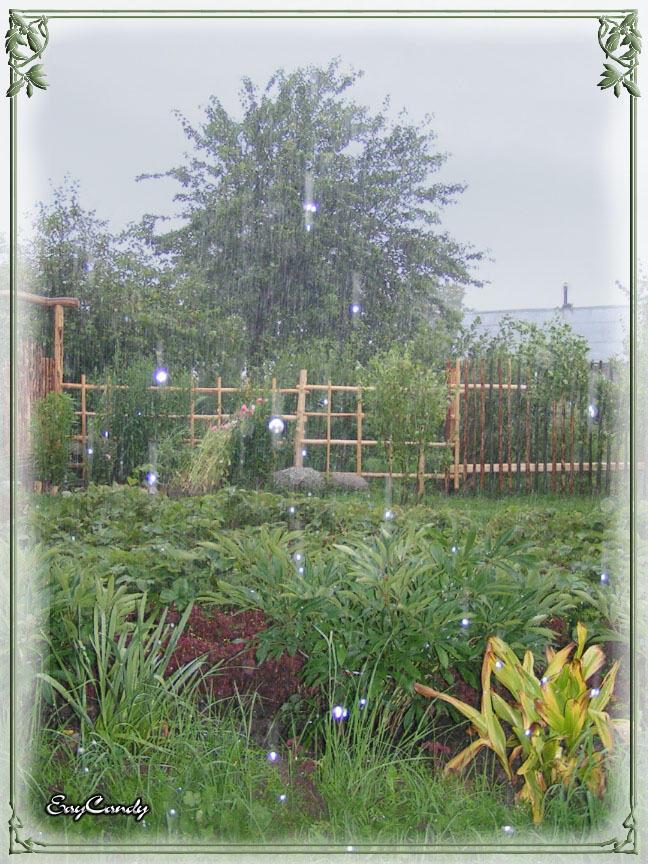"""photo """"The Magic Rain"""" tags: misc.,"""
