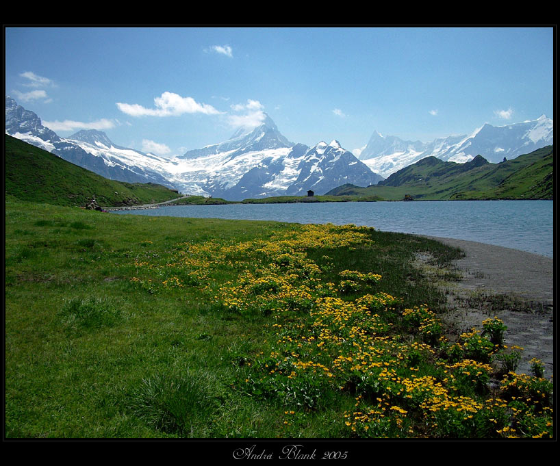 "photo ""Switzerland"" tags: landscape, nature, flowers, mountains"
