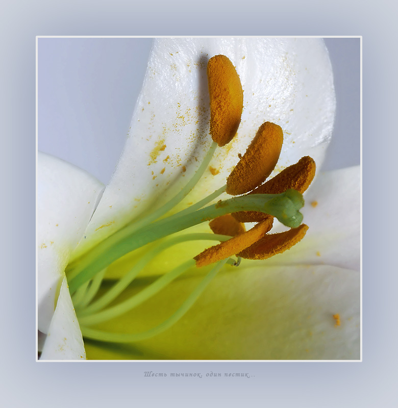 "photo ""Six stamens, one pestle..."" tags: macro and close-up, nature, flowers"