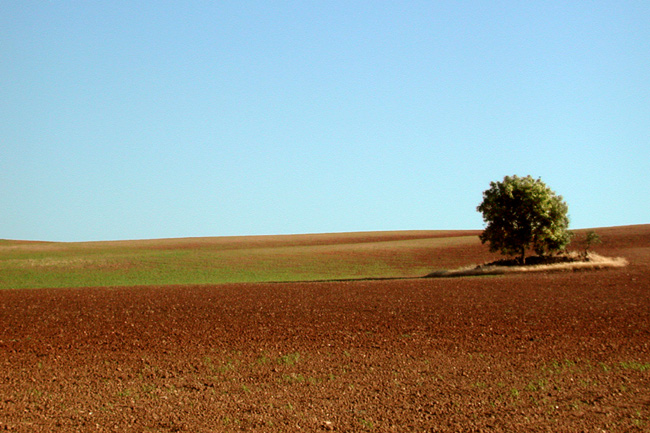 "photo ""solo"" tags: landscape, summer"