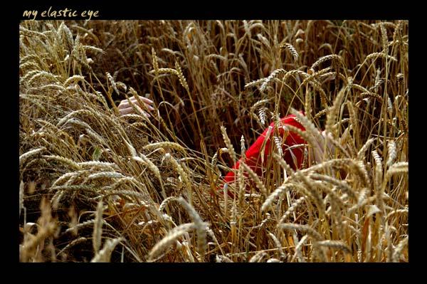 """фото """"золотой"""" метки: природа,"""