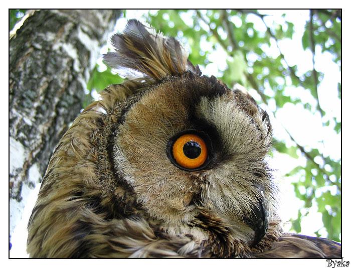 """фото """"Вгляд"""" метки: природа, дикие животные"""