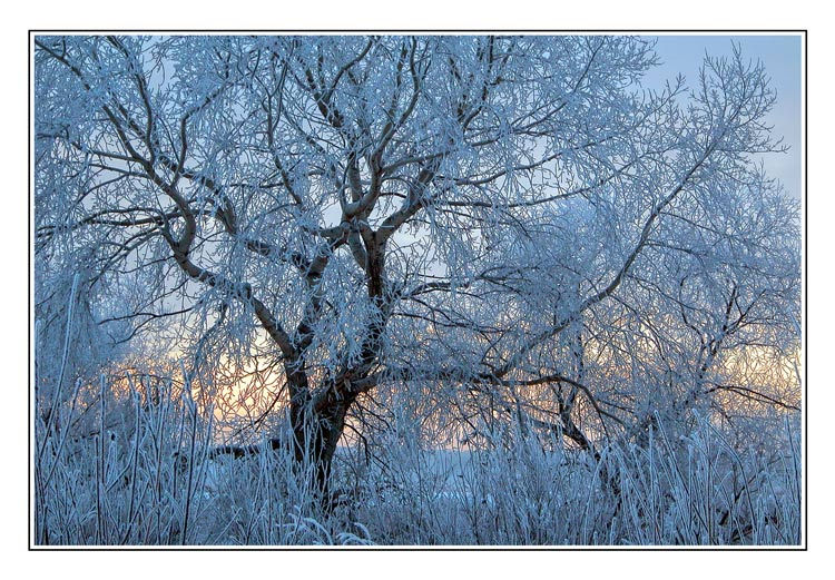 "photo ""Blue willow"" tags: landscape, sunset, winter"