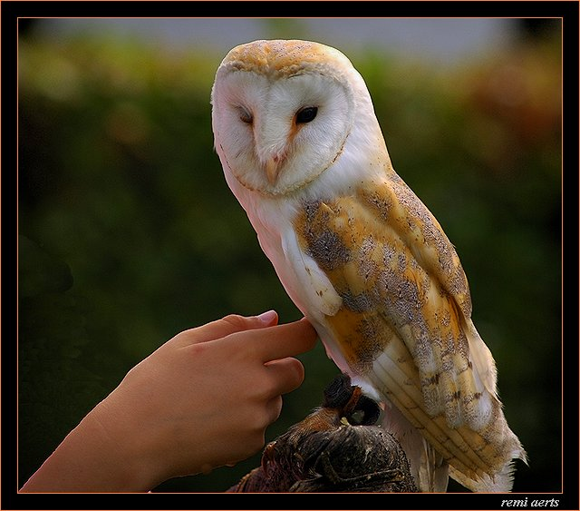 "photo ""lovely bird"" tags: nature, pets/farm animals"