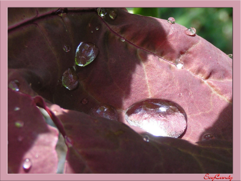 "photo ""The Sweet Tears"" tags: misc.,"