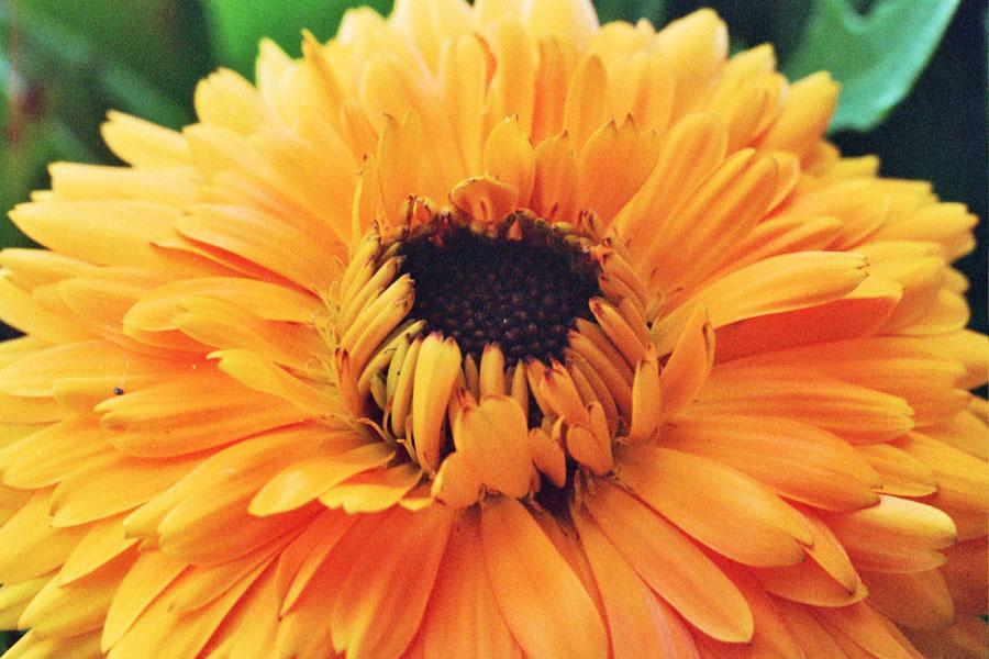 """фото """"желтое настроение"""" метки: макро и крупный план, природа, цветы"""