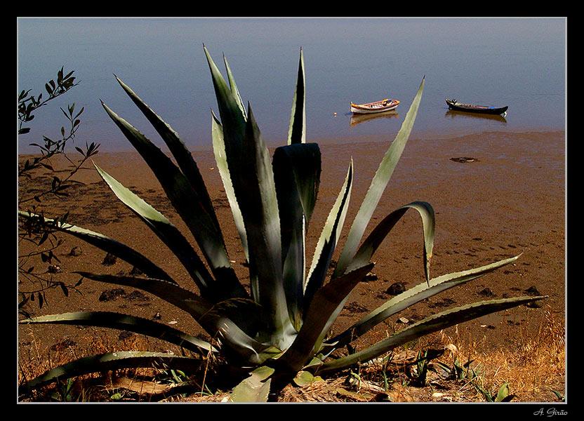 """photo """"Desert & Beach"""" tags: landscape, summer, water"""
