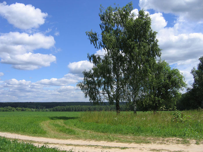 "photo ""Once upon in summer...."" tags: landscape, nature, forest"