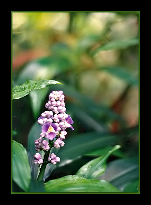 "photo ""Lilac simplicity"" tags: still life,"