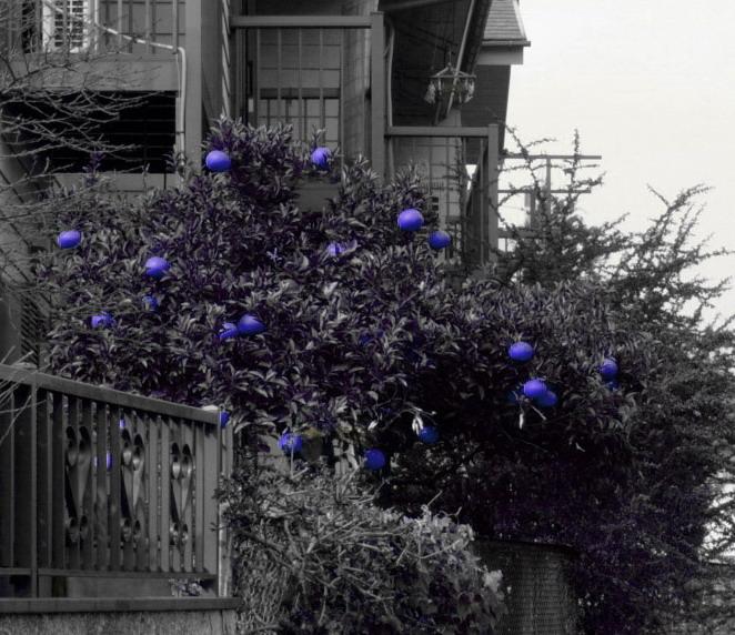 """фото """"Синие апельсины в стране чудес"""" метки: фотомонтаж, природа, цветы"""