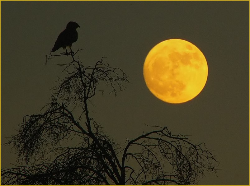 "photo ""The bird, the tree and the moon"" tags: landscape, montage, summer"